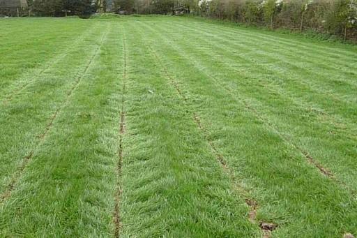 Grassland Sublift